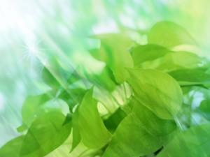 бело зеленые картинки
